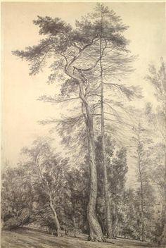Tree Study, John Constable