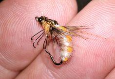 ...Another Shetland Spindrift Caddis on 12... #flyfishingaddict #flytyingtable #flytyingporn #flytyingaddict #tyingflies #flyfishingnation #flyfishingjunkie #fligenfischen #perhokalastus #bassfishing #fishingflies #flytying #flyfishing #deercreekflies #troutfishing #flyfishingporn#loonoutdoors #flugbindning#flyfishingonly #flytyingart #flytyingfanatic #speyfishing #flyfishinglife #flyfishingfanatic #flugfiske #pescacommosca #pescaamosca #flylords#troutflies#troutbum