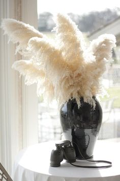 1000 Images About Pampas Grass Ideas On Pinterest