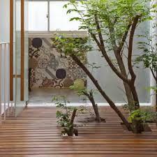 big indoor plants - Google Search