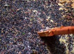 Mustuială de Cabernet sauvignon și Băbească neagră, fără ciorchini Wine Label, Cabernet Sauvignon, Firewood, Gardening, Plant, Life, Woodburning, Lawn And Garden, Horticulture