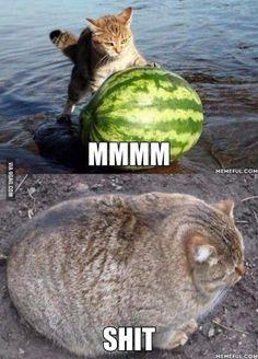 cat / eat
