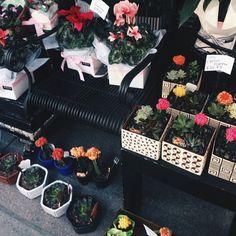 Pretty city plant shops // instagram @emmalucys