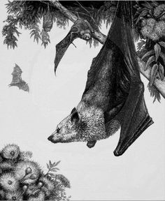 Black and white bat illustration