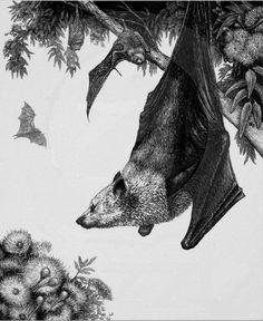 Flying Fox - Gildling