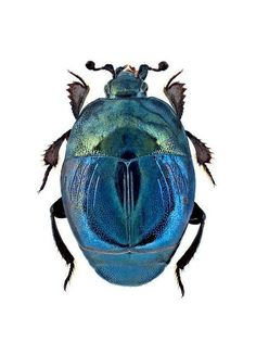 hip hop instrumentals updated daily =>… - Pin This Beetle Insect, Beetle Bug, Insect Art, Cool Insects, Bugs And Insects, Mantis Religiosa, Cool Bugs, Hip Hop Instrumental, Motifs Animal