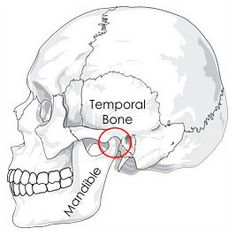 TMJ is an acronym that stands for temporomandibular joint, the joint located just in front of the ear on either side of the head. The temporomandibular joints and surrounding ligaments and muscles hold the mandible, or lower jawbone, to the temporal bone of the skull. Discs between each joint cushion the bones of the joints for smooth, painless movement. The TMJs allow motions of the jaw that facilitate eating, speaking, and making facial expressions.
