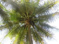 Looking up in Zumbon, Dominican Republic