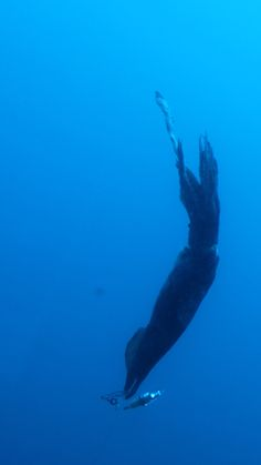 Giant squid! To catch a monster, bring patience and plenty of cash | The Verge