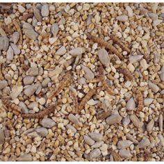 Robin and Tit Food - RF. From British Bird Food in the United Kingdom. Contact the bird food shop with your enquiries. Wild Bird Food, Wild Birds, Small Garden Birds, Robin Food, Sunflower Hearts, Food Suppliers, A Table, United Kingdom, Seeds