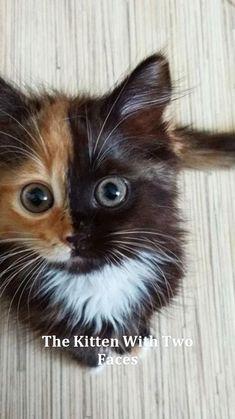 Cute Little Kittens, Cute Baby Cats, Cute Cats And Kittens, Kittens Cutest, Super Cute Animals, Cute Little Animals, Cute Funny Animals, Pretty Cats, Beautiful Cats