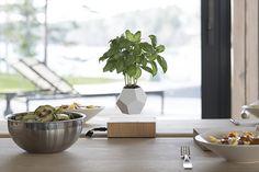 Gagnez 1 pot de fleurs en lévitation Lyfe !  http://www.decotendency.com/objet-deco-2/pot-de-fleurs-en-levitation-lyfe-44474  #deco #design #concours #plante #interieur #blogdeco #decotendency