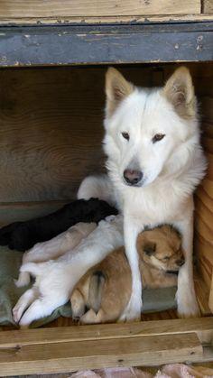 Bonita protecting her puppers http://ift.tt/2huIRPJ