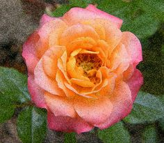 Surreal Rose Blossom by Mary Sedivy.