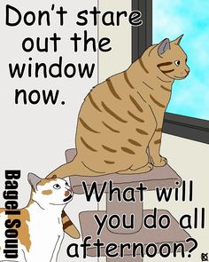 Bagel Soup - Cat Stare