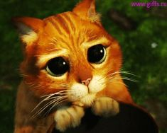 Кот из шрека ( 5 гифок). Потрясающая подборка гифок милых котиков из мультфильма шрек. Они такие милыхи, скачайте гифки и покажите друзьям.