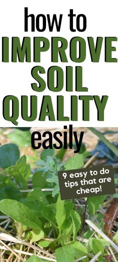 Need to improve soil drainage and quality for better yields? Here's 9 simple way to improve soil quality that can be done in your homestead or backyard garden. tips soil Easily Improve Soil Quality In Your Garden