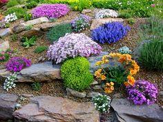 backyard design – Gardening Tips Rockery Garden, Rock Garden Plants, Sloped Garden, Xeriscaping, Rock Garden Design, Backyard Garden Design, Landscaping With Rocks, Front Yard Landscaping, Farm Gardens