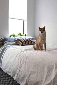 such a cute fox/dog.