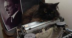 Czarny kot w mieszkaniu-muzeum Michaiła Bułhakowa
