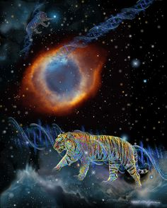 Siberian Tiger with Helix Nebula Contact: Marv Lyons - 619.691.8776  lyons@visionsynthesis.net