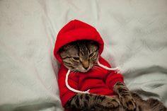 Moody teenager kitteh.
