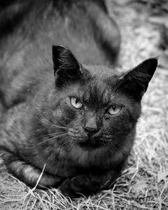 #cat #eyes #fujifilm #xe2 #monochrome #blackandwhite #SINTO