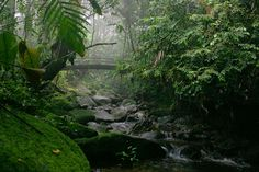 Misty Weepy Days - Kinabalu National Park, Sabah by rabani
