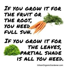 101 Gardening: If you grow it for the fruit or the root, you need full sun. If…