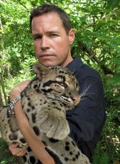 """from Jeff Corwin: """"rescued clouded leopard waking up after surgery in cambodia, he's still groggy. Big Cats, Cats And Kittens, Kitty Cats, Cute Baby Animals, Animals And Pets, Clouded Leopard, Exotic Cats, All About Cats, Cat People"""