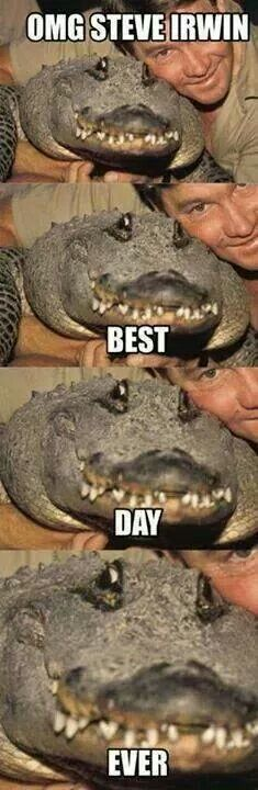 We compile the great collection of Top 30 steve irwin memes. Steve Irwin memes are viral right now on social media and internet. Animal Jokes, Funny Animal Memes, Cute Funny Animals, Funny Animal Pictures, Funny Cute, Funny Photos, Funny Images, Super Funny, Steve Irwin