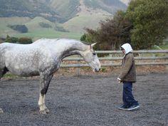 Horse Power Aotearoa New Zealand