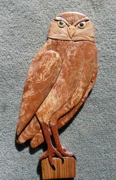 Burrowing Owl by Steve