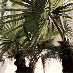 TRAVELLERSROBE.COM  @theunusual.child  #travellersrobe #plantlife #greenery #palms #sun #sunshine #summer #style #australia #boutique #fashion #fashionista #vacationmode #traveller #australianfashion #australianstyle #fashionblogger #resortwear #boho #bohochic #wanderlust #vacaymode #onlineboutique #styleblogger #instagood