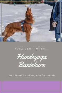 Vierpfotenassanas - Kurse in Tirol Yoga, Movie Posters, Movies, Seasons, Pet Dogs, Films, Yoga Tips, Film, Movie
