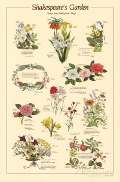 Shakespeare's Garden Flowers From Plays Chart Poster Art Print at AllPosters.com