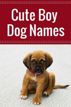 Adorable boy dog names perfect for a new pup.