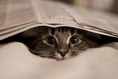 Resultado de imagen para gatos tumblr