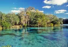 Silver Springs in Ocala, Florida... All natural coldspring where  they use to film the Old Tarzan Movies :) liza_thurman  I went tubing down one of the springs.It was ice cube cold!!!