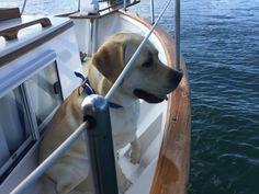 Jake enjoying our costal cruise on the Island Gypsy.