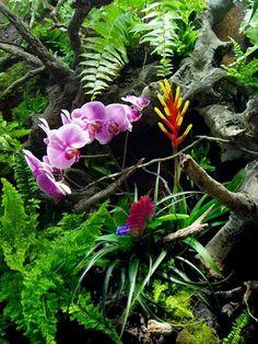 Mini Paludarium with orchids!!! :DDDD
