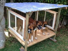 shade or shelter for outdoor dog run, made with salvaged wood, windows, and corrugated roofing