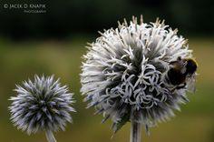 Jacek D Knapik Photography - Google+