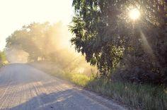 lauki, migla, putekļi, saules gaisma, rīts, agrs rīts, saullēkts, saulriets, saules stari, gaisma, koki, zemes ceļš, putekļi, grants ceļš, ceļš, lauki, vasara, summer Dace Karuselis