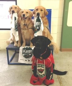 These dogs look great in their Minnesota Wild gear! Thanks @nhlwild  and @helpingpawsmn. #HockeyPets