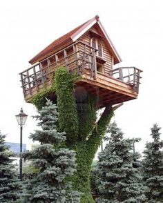 Fantastic small house   on a tree trunk, twined an ivy