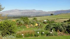 All the info about Wine tasting at Waverley Hills Wine Estate in Tulbagh, South Africa Wineries, Cape Town, Wine Tasting, Dates, South Africa, Vineyard, Travel, Outdoor, Outdoors