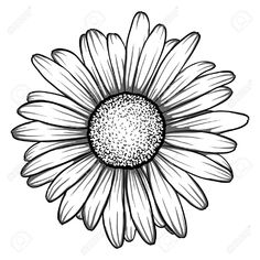 beautiful monochrome, black and white daisy flower isolated. for greeting cards . beautiful monochrome, black and white daisy flower isolated. for greeting cards and invitations of the wedding, birt Daisy Drawing, Sunflower Drawing, Daisy Flower Tattoos, Sunflower Tattoos, Gerbera Daisy Tattoo, Daisy Tattoo Designs, Daisies Tattoo, White Daisy Tattoo, Gerbera Flower