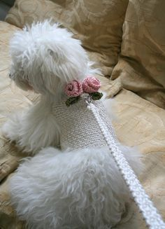 Crochet Dog Harness Dog Dress Small dog clothes Harness and Leash Handmade Pet Harness Dog harness vest Dog Top Pet Clothing BubaDog Small Dog Clothes, Pet Clothes, Dog Clothing, Dog Wedding, Wedding Dress, Dog Sweaters, Dog Dresses, Animal Party, Dog Harness