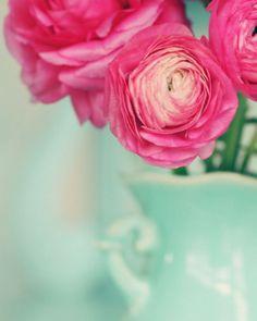 farm, pink roses, pink flowers, color schemes, color combos, blue, mint, color combinations, peoni